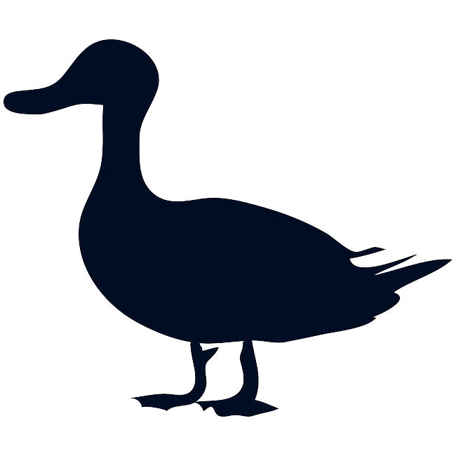 Maple Leaf Duck-Whole: 5lb Up 35# AVG | Food Service